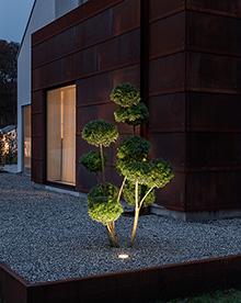 Grondspot die een boom uitlicht