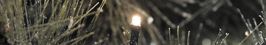 Kerstboomverlichting voor binnen en buiten